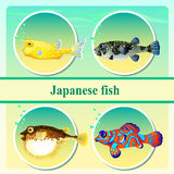 Set of four japanese sea fish Royalty Free Stock Images