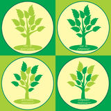 Set of four labels with trees green leaves Royalty Free Stock Images