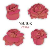 Set of four paper beige pink roses. 3 4 view on flowers. Floral elements for design. Vector illustration isolated on white background Royalty Free Stock Images