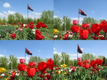 A set of four photos of the flag of the Right Sector among the park with a flower bed. Red and black flag on flagpole fluttering. In the wind against the royalty free stock photo