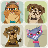 Set of four portraits of dogs and cats wearing hipster accessories Stock Photography