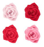 Set of four roses of various colors Stock Photography