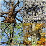 Set of four seasons trees Royalty Free Stock Photo