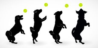Set of four Silhouettes of small happy dog Jack Russell Terrier standing on hind legs, jumpimg playing with ball or asking vector illustration