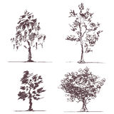 Set of four sketches trees Stock Images