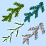 Set of four spruce, pine branches, isolated on a blue background.  Stock Photography