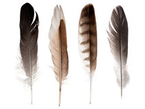 Set of four straight feathers isolated on white Stock Photos