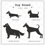 Set of four  stylized dog breeds. Background seamless  pattern with paws included Royalty Free Stock Photography
