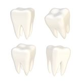 Set of four teeth isolated Royalty Free Stock Photo