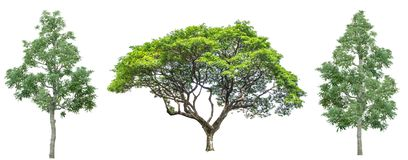 Set of four trees isolated against pure white royalty free stock images