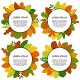 Set of four vector card with yellow leaves isolated on white background. Stock Images