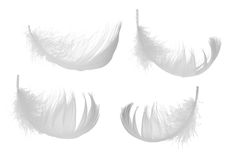 Set of four white feathers Stock Image