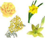 Set of four yellow flowers isolated on white Royalty Free Stock Images