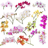 Set of fourteen orchid flowers branches isolated on white Stock Photo