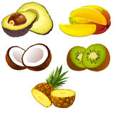 Set Früchte Lizenzfreies Stockbild