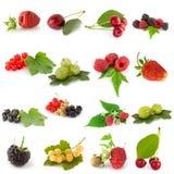 Set Früchte stockfotos