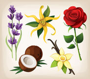 Set of fragrant flower flavors Royalty Free Stock Image