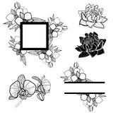 Set of frames and flowers Stock Photo