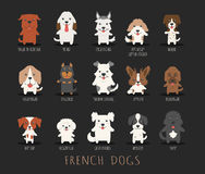 Set of french dogs Royalty Free Stock Image