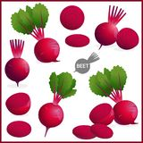 Set of fresh beet or red beetroot vegetable with green leaves in various shapes and styles in vector illustration. Format vector illustration