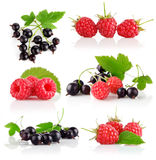 Set fresh berry fruits with green leaves Stock Image