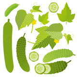 Set of fresh cucumbers. Illustrated set of whole and sliced fresh cucumbers with green leaves on a white background Stock Photography