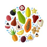 Set of fresh exotic asian fruits in flat style vector illustration