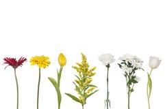 Set of fresh flowers. Isolated on white Stock Photos