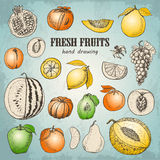 Set of fresh fruits in sketch style Royalty Free Stock Images
