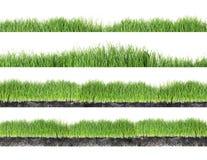 Set of fresh green grass on white stock photos