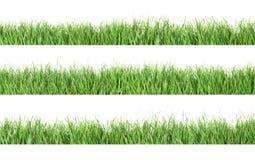 Set of fresh green grass on white. Background royalty free illustration