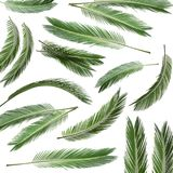Set with fresh green palm leaves. On white background stock images