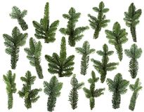 Set of fresh green pine branches isolated. On white background can be used as template Stock Photos