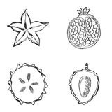 Set of fresh hand drawn fruits and vegetables and products. Royalty Free Stock Photos