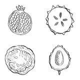 Set of fresh hand drawn fruits and vegetables and products. Stock Images