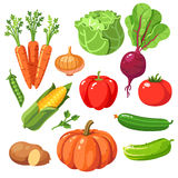 Set of fresh healthy vegetables Royalty Free Stock Photos