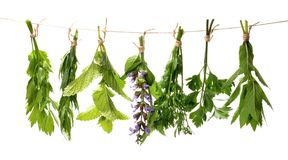 Set of fresh herbs hanging  on an  Royalty Free Stock Photography