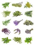 Set of fresh herbs on an isolated. White background stock images