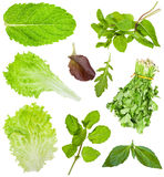 Set of fresh lettuce and salad leaves isolated. On white background Stock Photos