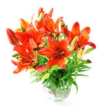 Set of  orange lilly. Summer flowers Stock Photos