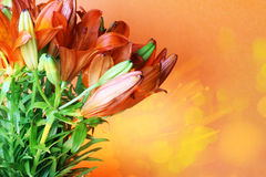 Set of  orange lilly. Summer flowers Stock Image