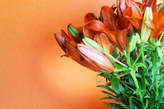 Set of  orange lilly. Summer flowers Royalty Free Stock Photography