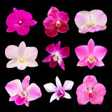 Set of fresh orchids Royalty Free Stock Photo