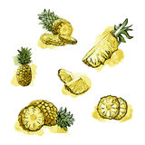 Set fresh pineapple fruits. Watercolor image of pineapple and slices vector Royalty Free Stock Photos
