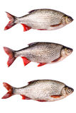Set fresh raw fish isolated,  clipping path. Set Fresh raw fish isolated on white background with clipping path Stock Photos