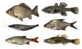 Set fresh raw fish isolated on white background.  Stock Photo