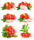 Set fresh red radish vegetables with green leaves. Set fresh red radish vegetables with cut and green leaves isolated on white background Royalty Free Stock Photos