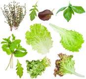 Set of fresh salad leaves isolated on white Stock Photos