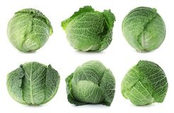 Set with fresh savoy cabbage. On white background royalty free stock photography