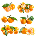 Set of fresh tangerines with leafs Royalty Free Stock Photos